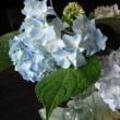 本日のお花🎵