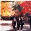 赤と黄色の日吉神社