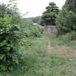 オリーブの剪定&草刈り