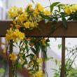 庭のお花達 クレマチス・満州黄他