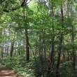 Trekking from Kanayamadaki to Mount Taihei