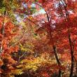 色づく季節に