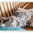 『カレンダー付き猫のイメージ写真』