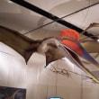 世界最大の翼竜展 いのちのたび博物館