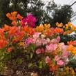 春たび Ayutthaya