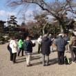 「梅の箕川・見学会」梅は満開!