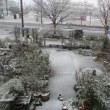 新潟市雪降ってきました