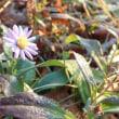 寒風に耐え咲く花