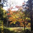 紅葉の盃山散歩
