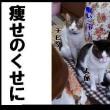 猫の日SP(=`・ω・´)∩にゃにゃにゃnにゃn