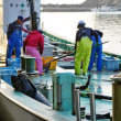 船から荷揚げ・波切漁港