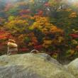 八幡平周辺の紅葉・・・・・♪