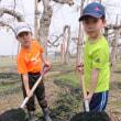 果樹園の春仕事。