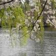 桜散り始めました~♪