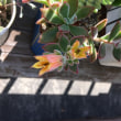 ハムシーの花&あ~ぁの一日