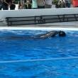 海きららのイルカショー Splush dorphine show of Umi Kirara aquarium