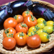茄子もトマトも