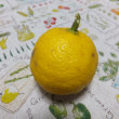 845.庭の檸檬