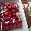見島発 【旬の果物二種いただきました】 <(_ _)>