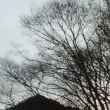12月10日 霜 & ライトアップ