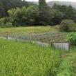 自給農業の定義