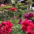 牡丹の花が綺麗