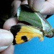 死骸といえど美しい  キマエコノハ