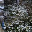 2018年2月12日この冬の初積雪
