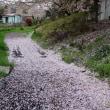 春の土手道