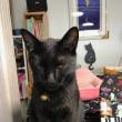 黒猫ジジィの 寝起き&あくび