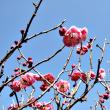 """""""梅は咲いたか、桜は?"""""""