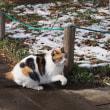 日曜散歩:雪が降った後に、鳥の足跡、猫、梅