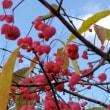 冬花 まゆみ