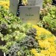 山梨温泉・フレンチ・蕎麦…そしてお花⑤ミヨシガーデン