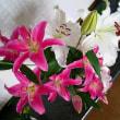ほぼ満開~の 百合の花
