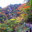 秋を探して 鳴子峡へ