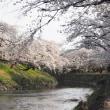 お花見 ( 境川 )