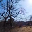 森林公園『水曜日』(2)