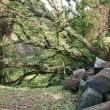 熊本城に行って来たンだよ!