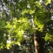 「自然の風」