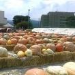 9月15日(金曜日)「ドテカボチャ」(aiaiさん)