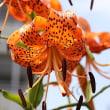 真夏の花々