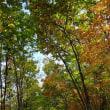 秋をMTBポタリング