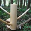 林業用語を数点
