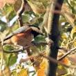 2月16日は 色んな小鳥に出会えた(*_*)