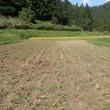 稲刈り、初日