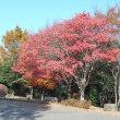 花見川団地=花島公園紅葉
