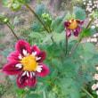 花編(12)庭を明るく彩る花盛り