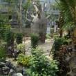 バオバブの木:広島市植物公園