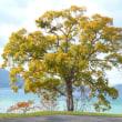 田沢湖畔の紅葉は・・・